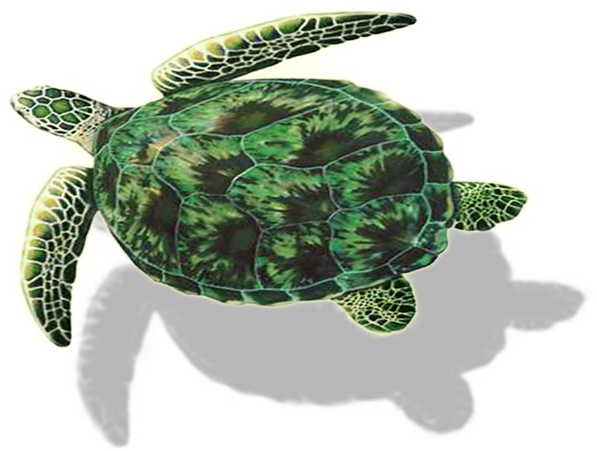 Why Turtle